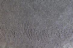 черная змейка кожи Стоковое фото RF