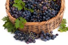 Черная зрелая виноградина в корзине Стоковые Изображения