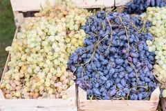 Черная и зеленая зрелая виноградина в деревянной коробке Стоковое Изображение