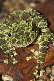 Черная и зеленая лягушка Стоковая Фотография RF