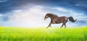 Черная идущая лошадь на зеленом поле над небом, границей для вебсайта Стоковое фото RF