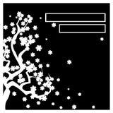 Черная карточка с белым деревом Сакурой Стоковые Фото