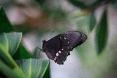 Черная красотка Стоковое фото RF