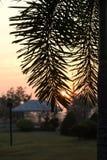 Черная ладонь выходит при солнце поднимая над крышей Стоковое Фото