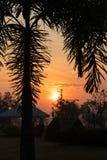 Черная ладонь выходит при солнце поднимая над крышей Стоковые Фото