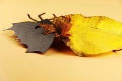 Черная летучая мышь на оранжевой предпосылке с красочным разрешением осени стоковое фото