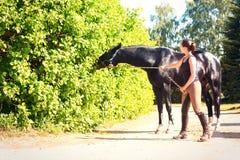 Черная лошадь есть куст выходит близко к equestrian молодой дамы Стоковое фото RF