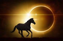 Черная лошадь на полной предпосылке солнечного затмения стоковые изображения rf