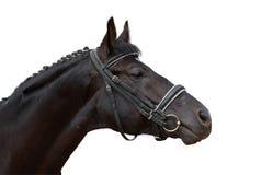 черная лошадь стоковые фото