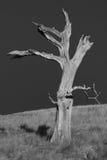 черная мертвая белизна вала Стоковое Изображение RF