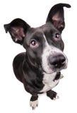 Черная милая собака Стоковые Изображения