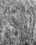 черная мраморная белизна Стоковая Фотография RF