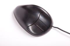 черная мышь Стоковая Фотография RF