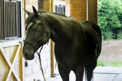 Черная лошадь в конюшне Стоковое фото RF