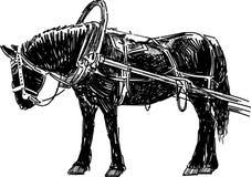 Черная лошадь в проводке Стоковые Фото