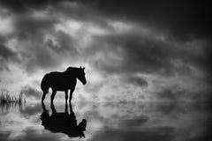Черная лошадь стоковые изображения rf