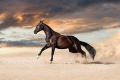 черная лошадь Стоковое Фото