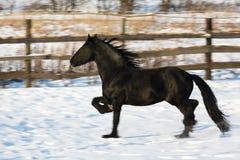 Черная лошадь frisian в зиме Стоковые Фотографии RF