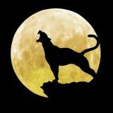 Черная пантера перед луной Стоковые Изображения