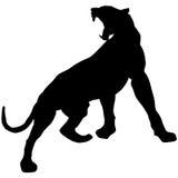 Черная пантера ревет loudly2 Стоковое Фото