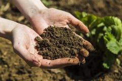 Черная почва в руках женщины Стоковые Фотографии RF