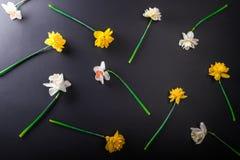 Черная предпосылка с белым и желтым narcissus цветет желтый цвет картины сердца цветков падения бабочки флористический Стоковые Изображения RF