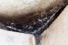 Черная прессформа в угле живущей комнаты, грибок стоковая фотография rf