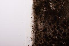 черная прессформа Стоковое фото RF
