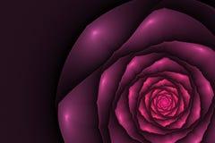 Черная предпосылка с розой пинка в угле Текстура цветка Стоковые Фото