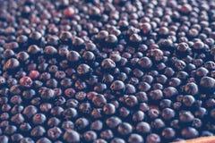 Черная предпосылка Ashberry Chokeberry, селективный фокус Стоковые Фотографии RF