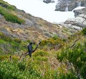 Черная птица осматривая долину стоковое фото