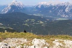 Черная птица сидя восхищающ высокогорный взгляд Стоковое Изображение RF