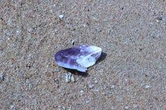 Черная раковина на брюнет пляжа красивом Стоковое Изображение RF
