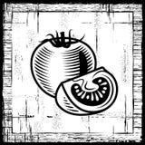 черная ретро белизна томата Стоковые Фотографии RF