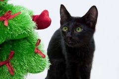 Черная рождественская елка котенка и игрушки Стоковые Изображения RF