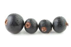 черная смородина Стоковые Изображения RF