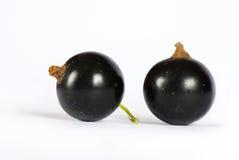 черная смородина стоковое фото