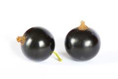 черная смородина стоковая фотография