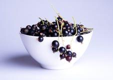 черная смородина Стоковые Фото