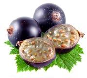 Черная смородина, ягоды с половиной стоковая фотография rf