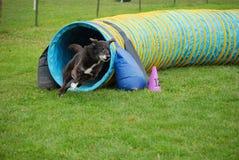 Черная собака выходит тоннель стоковая фотография rf