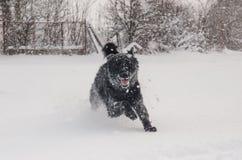 Черная собака в снеге Стоковое Фото
