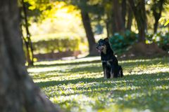черная собака играя в зеленом саде Стоковые Фото