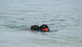 Черная собака немецкой овчарки выручая игрушку на пляже собаки Стоковые Фотографии RF