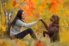 Черная собака остолопа представляя в парке осени стоковые фото