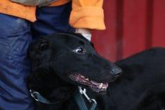 Черная собака - приют для животных - надеющийся собака Стоковое Фото