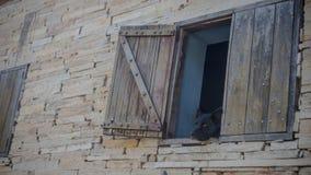 Черная собака смотря через окно деревенского дома стоковые фотографии rf