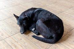 Черная собака с сияющими волосами Стоковые Фото