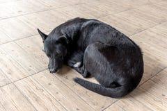 Черная собака с сияющими волосами Стоковое Изображение