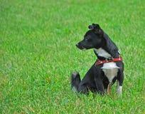 Черная собака Стоковое фото RF